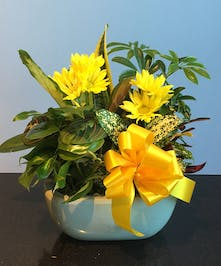 Dish garden filled with lush green and blooming yellow plants tied with yellow ribbon.
