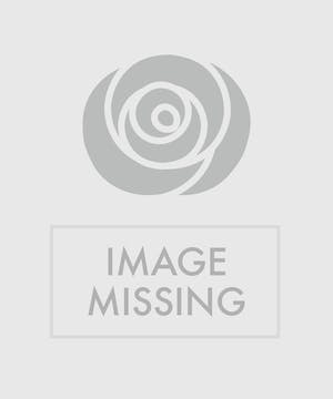 Six roses of your color of choice, arranged in a vase and tied with ribbon