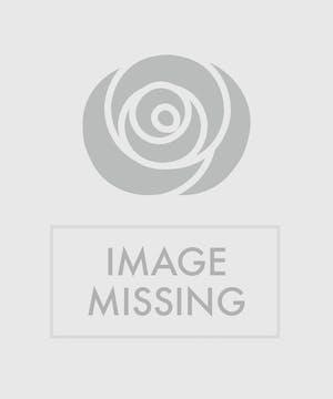 Summertime Roses