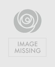 NY Yankee/Cemetery