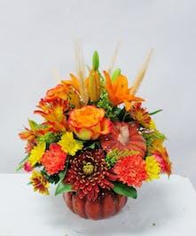 Moravian Autumn Pumpkin