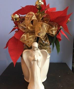 Angel Poinsettia