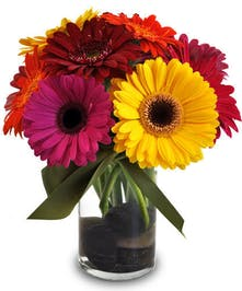 Vibrant gerbera daisies in assorted colors in a cylinder vase accented with river rocks.