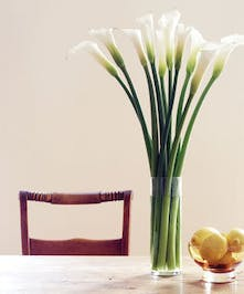 Ten white calla lilies in a simple cylinder vase