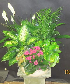 Assorted green and blooming plants presented in a large basket.