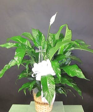 Peace lily plant accented with a keepsake crystal cross