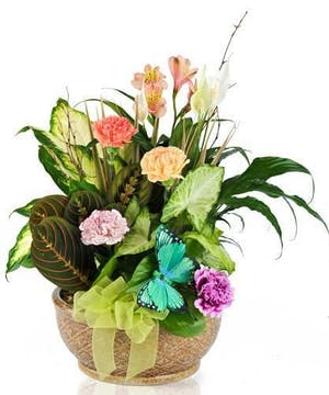 Assorted green plants and cut flowers topped off with a bright butterfly decoration